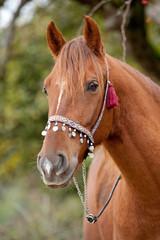 Pferde Porträt
