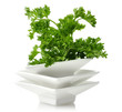 Fresh Parsley Herb