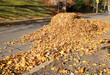 Pile of autumn leaves at roadside