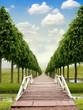Bridge and Path