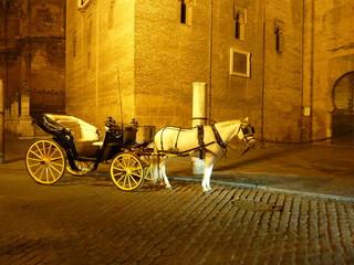 carrozza con cavallo bianco