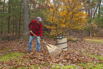 Senior raking autumn leaves