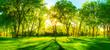 Springtime-Warmth-II