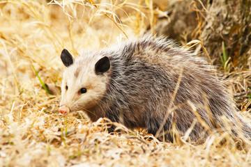 Passive-Possum