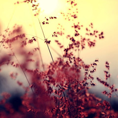 Memories-of-you