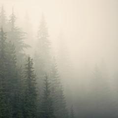 misty mountain weather 9