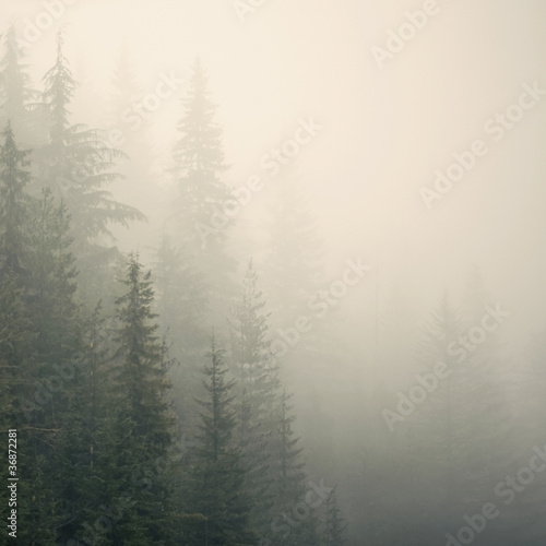 misty mountain weather 9