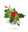 vector christmas background with sprig of European holly