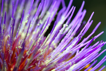 Macro of beautiful flower in the garden