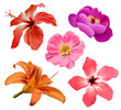Fototapeten,blume,jahreszeit,exotisch,hawaii