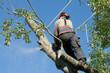 Man sawing through branch
