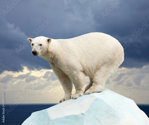 In de dag Ijsbeer polar bear