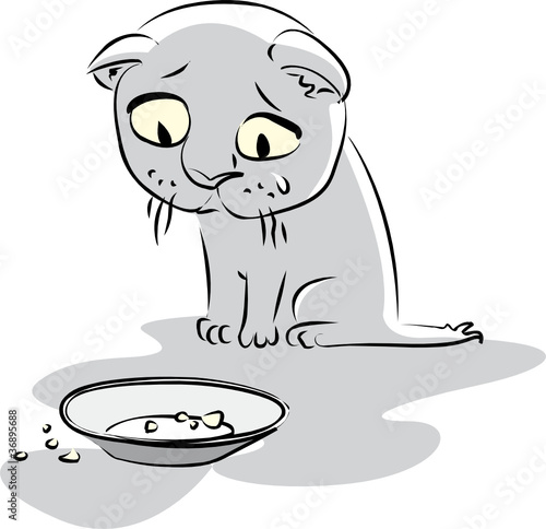 Hungry little kitty looks at the empty plate