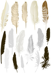 sixteen isolated feathers set