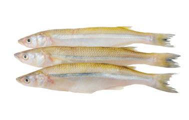 Smelt fish isolated on white background