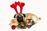 Christmas dog and kittens.