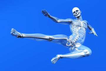 Anatomie - Sprung