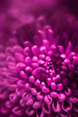 pink flower bud