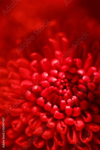 red flower bud