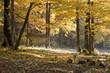 crib in autumn forest
