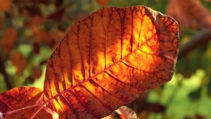 foglie d'autunno rosse