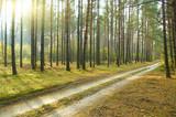 Fototapeta uroda - duży - Lasy iglaste