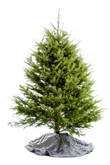 Undecorated Christmas tree isolated on white