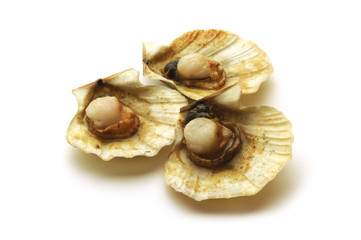Chlamys opercularis