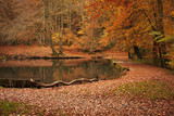 Autumnal landscape in forest with lake