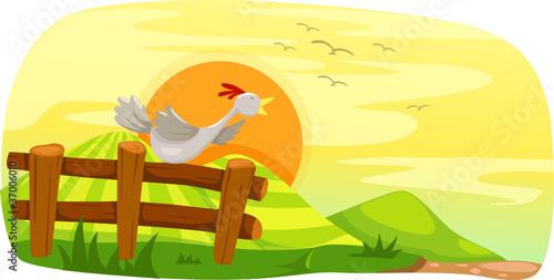 Foto op Canvas Boerderij Chicken