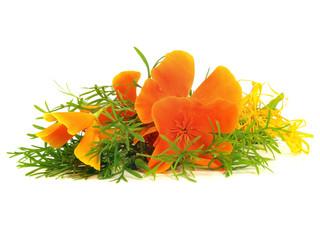 Eschscholzia californica flower