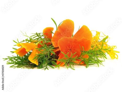 Papiers peints Poppy Eschscholzia californica flower