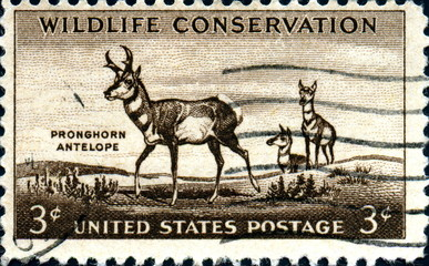 Wildlife conservation.Pronghorn Antelope. US Postage.