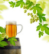 Still life with beer and hop plan, isolated on white background