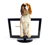 Fototapety Dog getting out of the monitor.