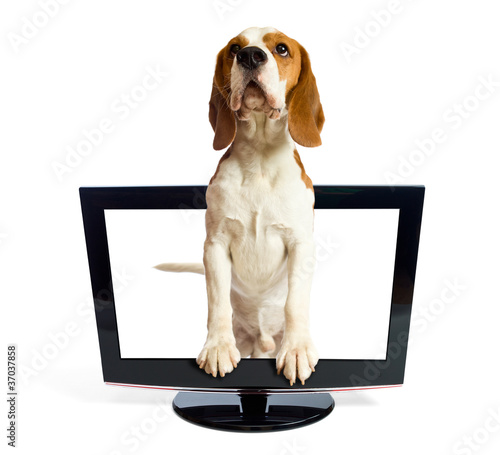 Dog getting out of the monitor.