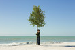 Boy hugging tree growing on beach