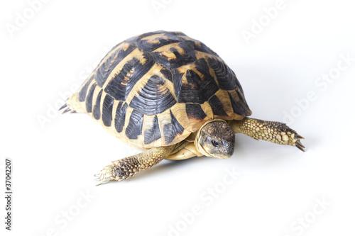 Papiers peints Tortue tortue de terre