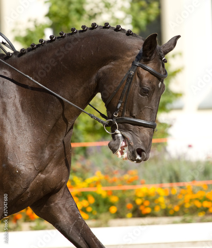 Fototapeten,dressage,reiten,pferd,racehorse