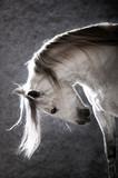 Fototapete Hintergrund - Grau - Reiten