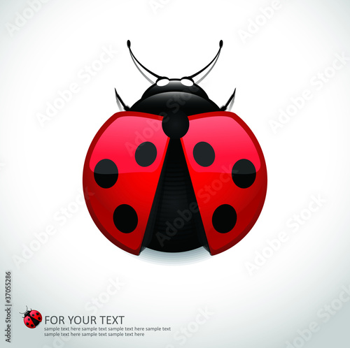 Realistic Lady Bug