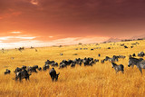 Fototapete Mara - Abwanderung - Säugetiere