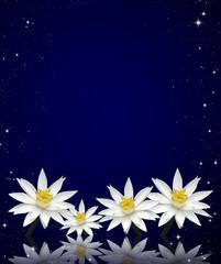 Lotus white night sky background