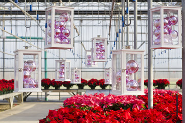 Poinsettias and Christmas Decorations