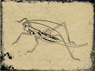 silhouette grasshopper on grunge background