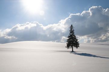 雪原に立つ木