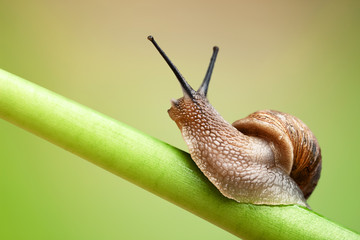 Snail on green stem