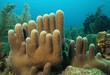 Leinwanddruck Bild - Pillar Coral - Roatan, Bay Islands, Honduras