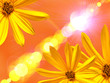 Yellow flower on lighten background