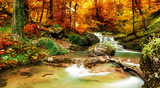 Fototapety Autumn creek woods with yellow trees